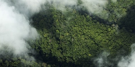 Global deforestation is decreasing. Or is it? | World Environment Nature News | Scoop.it