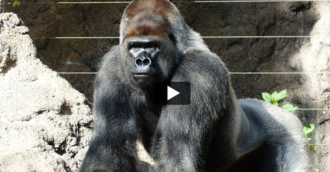 Proof That Zoos Are Miserable Places for Animals | Videos | PETA Kids | Nature Animals humankind | Scoop.it