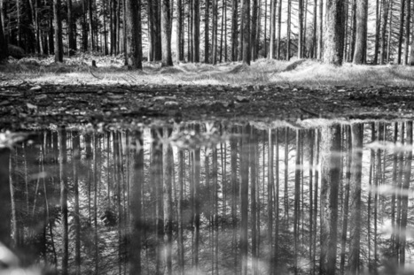 Using the X-T1 to Capture Reflections in Puddles | Fujifilm X | Scoop.it