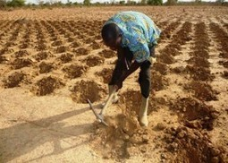 Zai system overcomes desertifacation - Farming Africa | Farming-Africa | Scoop.it