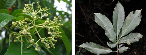 Identifican 18 especies de plantas potencialmente nocivas para ecosistemas venezolanos – Boletín Informativo | Agua | Scoop.it