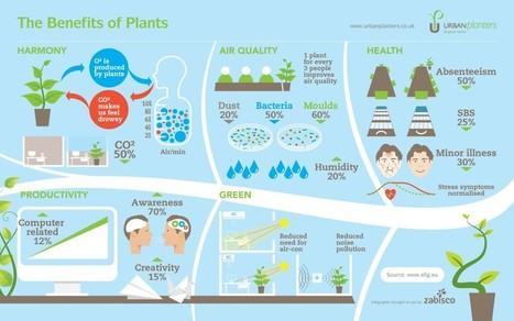 The Benefits Of Plants   green infographics   Scoop.it
