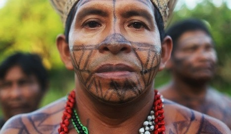 Family ties in the language jungle | The Archaeology News Network | Kiosque du monde : Amériques | Scoop.it