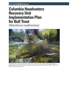 Feds release final bull trout recovery plan; critics label it 'extinction plan' | GarryRogers NatCon News | Scoop.it