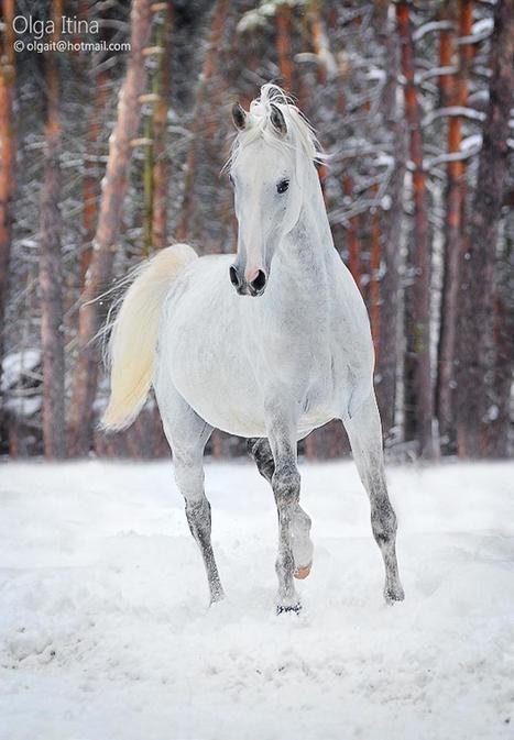 50 πανέμορφες φωτογραφίες με άλογα | ΤΡΑΠΕΖΑ ΥΛΙΚΟΥ 2013-2014 | Scoop.it