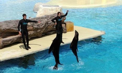 Pas de dauphins à Beauval - le zoo renonce à son delphinarium !   Biodiversité   Scoop.it