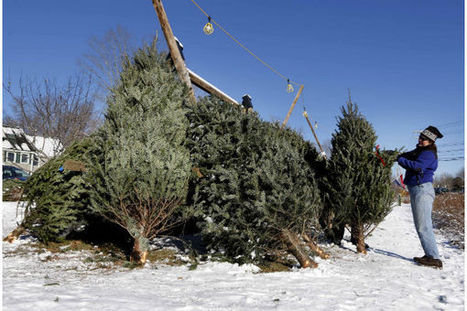 Christmas trees: What 'treedition' says about your family - Christian Science Monitor | ChristmasDay25 | Scoop.it