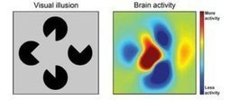 Brain fills gaps to produce a likely picture | The brain and illusions | Scoop.it
