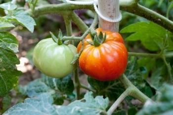 City Council helps gardens grow - Boulder Weekly   Vertical Farm - Food Factory   Scoop.it