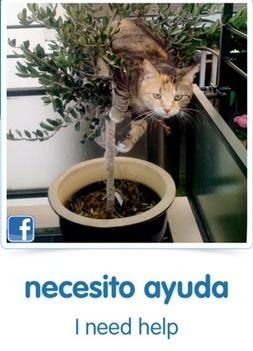 CatAcademy Will Teach You Spanish with Cat Memes - Gamification Co | DigiDid | Scoop.it