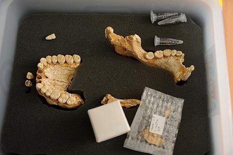 L'homme de Néandertal se soignait-il par les plantes ? | Ca m'interpelle... | Scoop.it