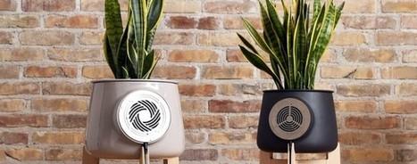 Le mag de la maison intelligente » Clairy : Purifier l'air de sa maison avec des plantes | Hightech, domotique, robotique et objets connectés sur le Net | Scoop.it