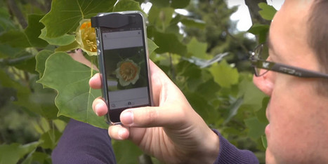 Shazam para plantas: #app que permite identificar una planta sólo tomando una foto  | E Learnig, Blended Learning, Mobile Learning | Scoop.it