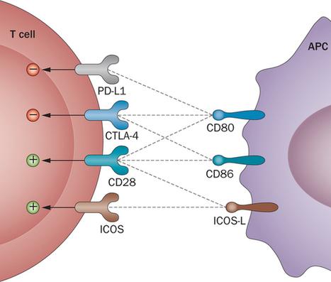 Targeting co-stimulatory pathways: transplantation and autoimmunity : Nature Reviews Nephrology : Nature Publishing Group   Immunology and Biotherapies   Scoop.it