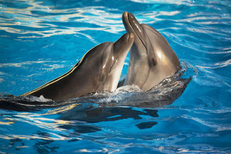 Romanian Politician Seeks to Give Dolphins Legal Personhood   All about water, the oceans, environmental issues   Scoop.it