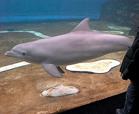 The Strange World of Dolphin-Assisted Therapy - The Atlantic | Therapy | Scoop.it