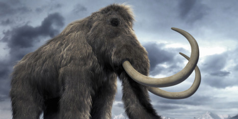 Welcome Back Woolly Mammoth? | Farming, Forests, Water & Fishing (No Petroleum Added) | Scoop.it