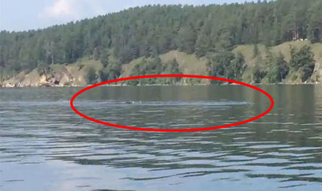 Eerie giant underwater serpent filmed in lake sparks fears of the REAL Loch Ness | Cryptic Content: Cryptozoology | Scoop.it