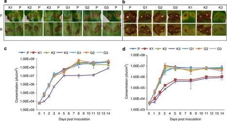 The ISME Journal: Host immune responses accelerate pathogen evolution (2013) | Effectors and Plant Immunity | Scoop.it
