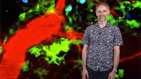 Antigen Recognition: Michael Dustin | Immunology, vaccine & infectious diseases | Scoop.it