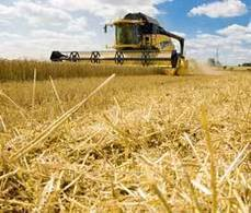 ROTHAMSTED MENTION: Rothamsted plans GM winter wheat field trial   BIOSCIENCE NEWS   Scoop.it