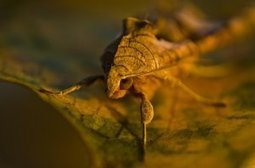 Inspired by Moth Eyeballs, Chemists Develop Gold Coating That Dims Glare | Biomimicry | Scoop.it