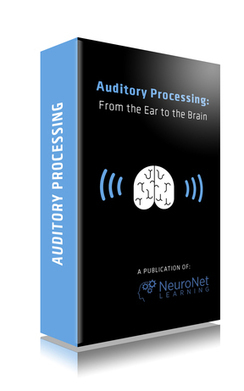 Auditory Processing | From the Ear to the Brain | Travail | Scoop.it