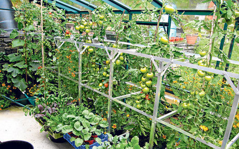 What to grow in a greenhouse in winter - Telegraph | Greening your home | Scoop.it