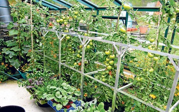 What to grow in a greenhouse in winter - Telegraph   Container Gardening   Scoop.it