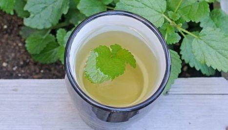 Can't Sleep? Try This Lemon Balm Tea   Home Remedies   Scoop.it