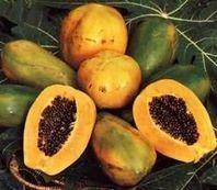 Alerte à la papaye thaïe génétiquement modifiée | Toxique, soyons vigilant ! | Scoop.it