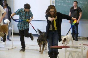 La zoothérapie au secours des élèves en difficulté | Brigitte Trahan | Actualités | Médiation animale | Scoop.it