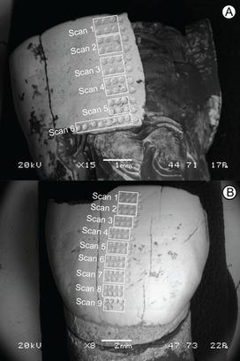 Una técnica láser revela el fin de la lactancia de un humano de Atapuerca | Arqueología, Historia Antigua y Medieval - Archeology, Ancient and Medieval History byTerrae Antiqvae (Grupos) | Scoop.it