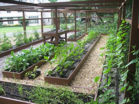 School Garden | Backyard Vegetable Garden - Low Maintenance Garden | School Garden Systems | Scoop.it