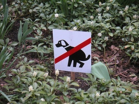 Taiwan Trades Lottery Tickets for Dog Poop | Strange days indeed... | Scoop.it