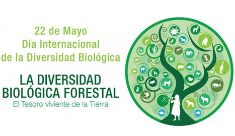 ONU festeja el Día Internacional de la Diversidad Biológica apuntando a las claves de un desarrollo sustentable | Agua | Scoop.it