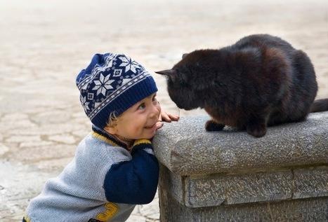 L'humain responsable des chats | Dominique Giraudet | Scoop.it