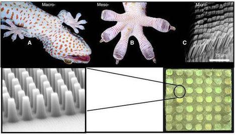 Darpa : Une technologie inspirée des geckos pour grimper aux murs | Ressources pour la Technologie au College | Scoop.it