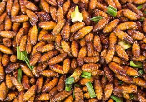 Manger des insectes: attention danger, prévient l'ANSES | Monde Agricole | Scoop.it