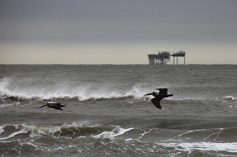 Gulf ecosystem in crisis after BP spill | SecureOil | Scoop.it