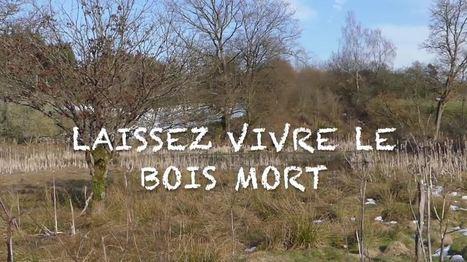 Laissez vivre le bois mort | Les colocs du jardin | Scoop.it