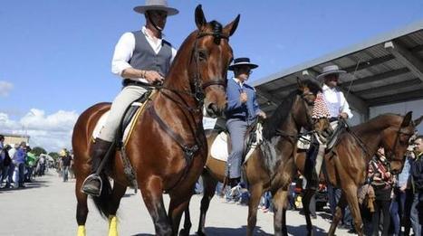 Macerata: Cavallo protagonista della Raci 2014 | Le Marche un'altra Italia | Scoop.it