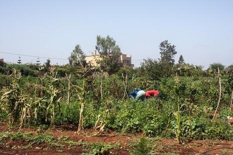 Maroc : Mieux que le bio, l'agroécologie | Questions de développement ... | Scoop.it