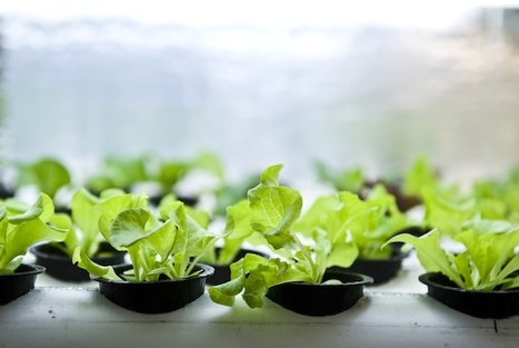 Localize It: Podponics Grows High-Tech Organic Produce In Shipping Containers   Fast Company   Sustainable Futures   Scoop.it
