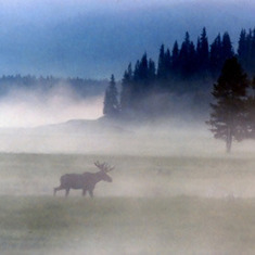 Rapid Climate Changes Turn North Woods into Moose Graveyard: Scientific American   Climate change challenges   Scoop.it
