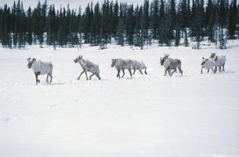 Tundras in Canada: The Coldest Climate on the Continent | Geography of North America | Scoop.it