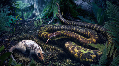 Yale Researchers Illuminate Major Evolutionary Patterns of Snakes | Geology | Scoop.it