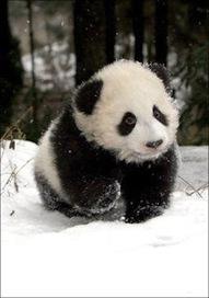 Google Panda Update Number 20 - Seo Sandwitch Blog | Smart Media Tips | Scoop.it