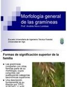 Morfología general de las Gramíneas | Ingeniería en Molineria | Scoop.it