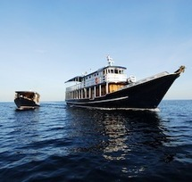 Scuba Diving in Indonesia with WALLACEA DIVE CRUISE - Divers' Reviews   Dive Operators around the World   Scoop.it
